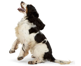 Dog barking image