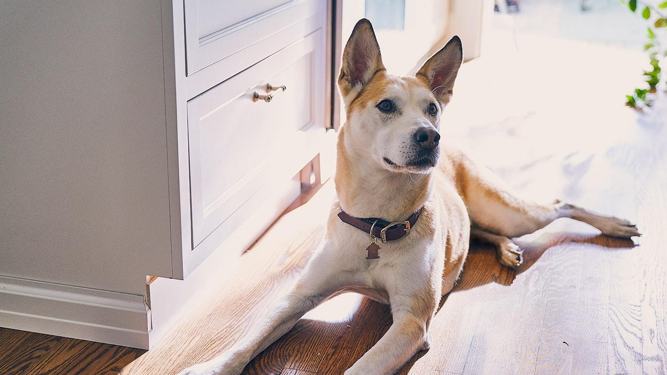 Hundefutter Katzenfutter Ernhrung Hund U Katze Hills Pet Maxim Vallentino 30 Cm Ftterung